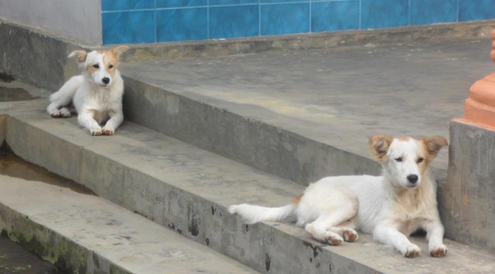 twin pups