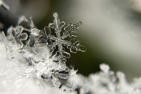 """please tell me you got the whole """"unique snowflake"""" reference..."""