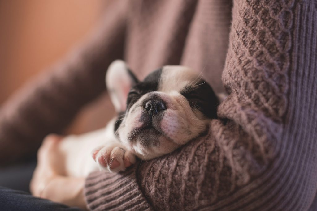 Just a puppy napping for better Local SEO